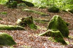 RuheForst in Wilgartswiesen