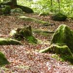 Aktuelles von Kühlmeyer Bestattungen Annweiler